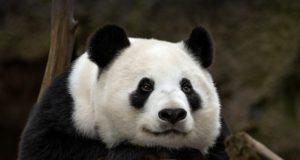 Немецкие слова на тему «Животные» с переводом