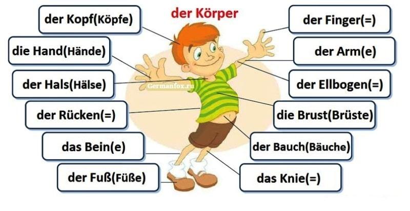 Лексика по теме Внешность человека немецкий