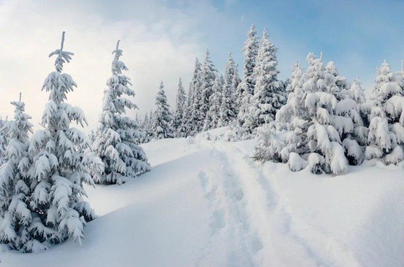 Как я провел зимние каникулы